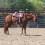 Cash at Horse Creek Ranch
