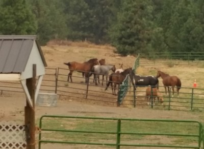My Grandhorses are safe at Painted Hill Ranch