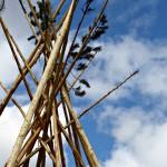 tipi poles low resolution